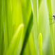 Green nature background with dragonfly - PhotoDune Item for Sale