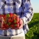 Woman in Shirt Hold Plastic Box Full of Strawberries - VideoHive Item for Sale