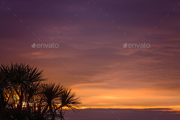Cabbage tree and sunset sky - Stock Photo - Images