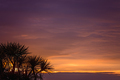Cabbage tree and sunset sky - PhotoDune Item for Sale