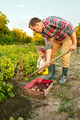 farming, gardening, agriculture and people concept - young man planting potatoes at garden or farm - PhotoDune Item for Sale