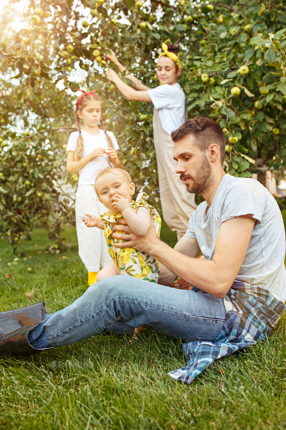 The happy young family during picking apples in a garden outdoors - Stock Photo - Images