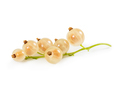 Ripe white currant on stem isolated on white - PhotoDune Item for Sale