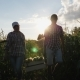 Two Farmers Carry Corn in a Wooden Box at Sunset - VideoHive Item for Sale
