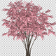 Barberry Bush - VideoHive Item for Sale