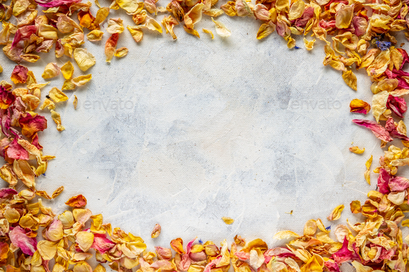 Frame of dried wild rose petals - Stock Photo - Images