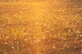 Meadow in the light of the setting sun - PhotoDune Item for Sale