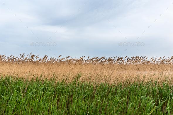 Landscape of delta of river Evros, Greece - Stock Photo - Images