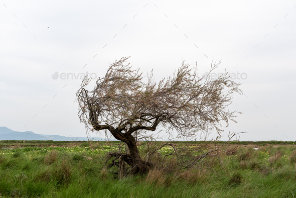 Tree in delta of river Evros, Greece - Stock Photo - Images