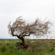 Tree in delta of river Evros, Greece - PhotoDune Item for Sale