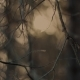 Dry Branches in Forest - VideoHive Item for Sale