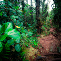 Mysterious vegetation of tropical rainforest - PhotoDune Item for Sale
