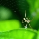 Spider Weaves a Web - VideoHive Item for Sale