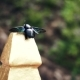 Beetle of Unusual Color in the Asian Park - VideoHive Item for Sale