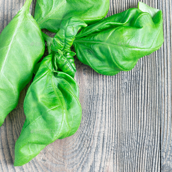 Fresh basil leaves on a gray wooden background, copy space, top - Stock Photo - Images