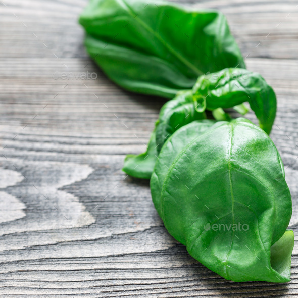 Fresh basil leaves on gray wooden background, copy space, square - Stock Photo - Images