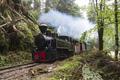 Steam Train in Woods - PhotoDune Item for Sale