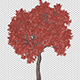 Sprouting Tree With Red Leaves - VideoHive Item for Sale
