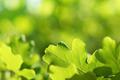 Oak leaves on green natural background - PhotoDune Item for Sale