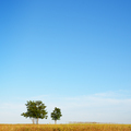 Minimal summer landscape - PhotoDune Item for Sale