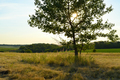 Summer landscape with tree on meadow - PhotoDune Item for Sale