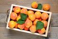 Apricots in wooden box top view - PhotoDune Item for Sale
