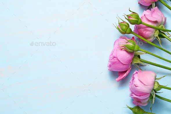 Pink roses on blue table - Stock Photo - Images