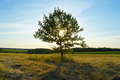Summer landscape with shining sun through lonely tree - PhotoDune Item for Sale