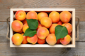 Apricots in wooden box close-up - PhotoDune Item for Sale