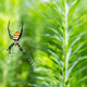 wasp spider on web - PhotoDune Item for Sale