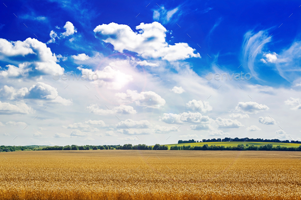 Summer field against the blue sky. Beautiful landscape. - Stock Photo - Images
