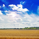 Summer field against the blue sky. Beautiful landscape. - PhotoDune Item for Sale