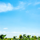 Big field of sunflowers on a blue sky background. Composition of nature. - PhotoDune Item for Sale