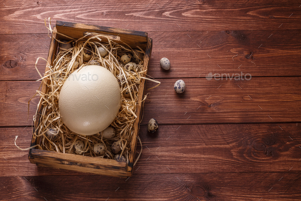 Big ostrich egg on straw surround by quail eggs, copyspace - Stock Photo - Images