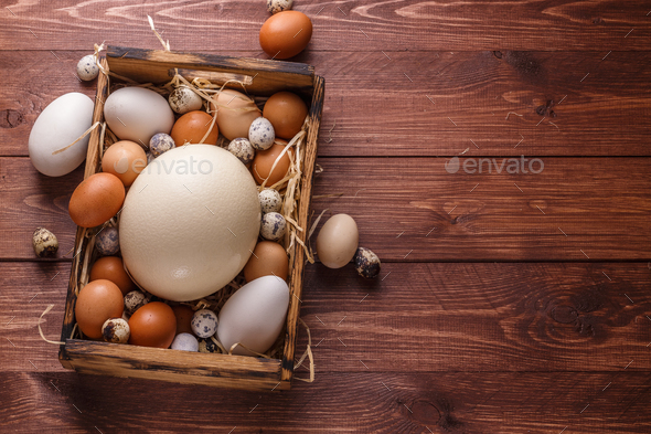 Eggs from different birds, place for wording - Stock Photo - Images