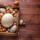 Eggs from different birds, place for wording - PhotoDune Item for Sale