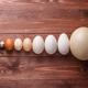 Quail eggs, hen eggs, goose eggs, ostricg egg - PhotoDune Item for Sale
