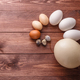 Egg of different birds on a farm - PhotoDune Item for Sale