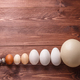 Differet size eggs from different birds - PhotoDune Item for Sale