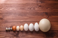 Differet size eggs from different birds