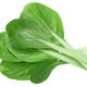 Bok choy chinese chard, top - PhotoDune Item for Sale