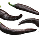 Brown Chilaca Pasilla chile peppers, paths - PhotoDune Item for Sale
