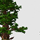 Large Trees  - VideoHive Item for Sale