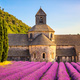 Abbey of Senanque blooming lavender flowers on sunset. Gordes, L - PhotoDune Item for Sale