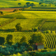 Bolgheri and Castagneto vineyard aerial view on sunset. Maremma - PhotoDune Item for Sale