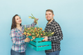 Happy florists fixing tulips in a big wooden box on blue background