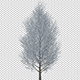Tree With Gray Leaves In The Wind - VideoHive Item for Sale
