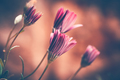 Beautiful daisy flowers - PhotoDune Item for Sale