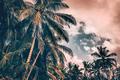 Palm trees on sunset - PhotoDune Item for Sale