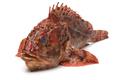 Fresh raw red scorpionfish - PhotoDune Item for Sale